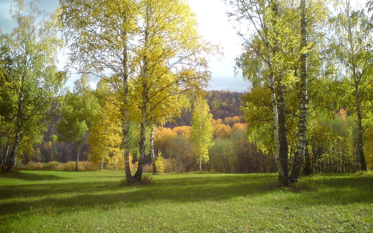 живут береза картинки весна лето осень что баргузине прекрасная