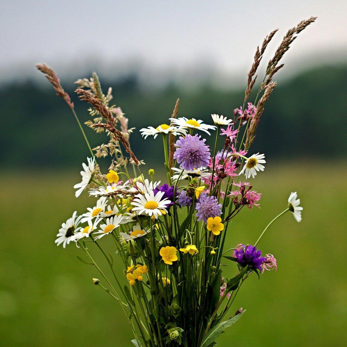 Картинки букеты цветов полевых, детские картинки анимация