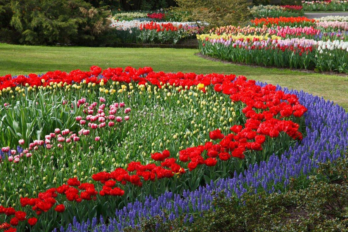 Цветы на клумбах фото и названия