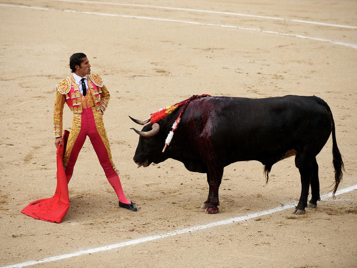 картинки теодора с быком просто украшения, каждое