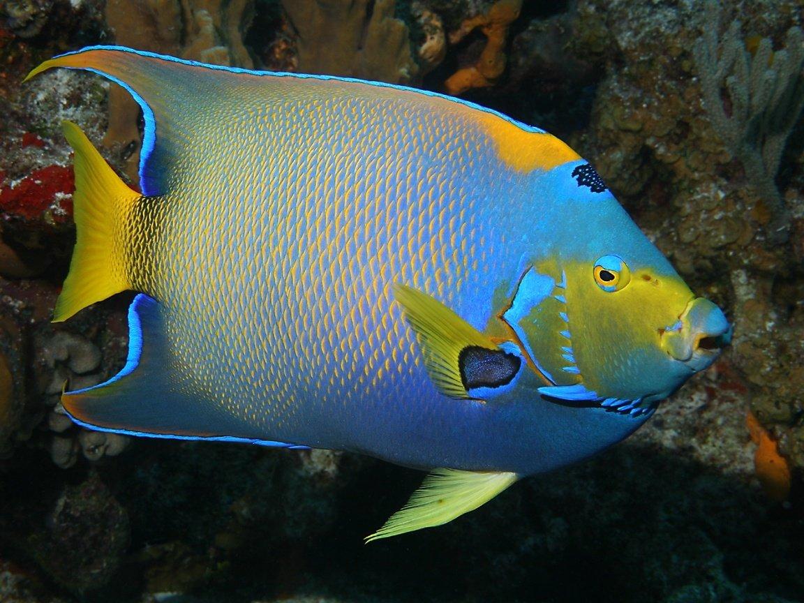 Картинки о рыбе сон