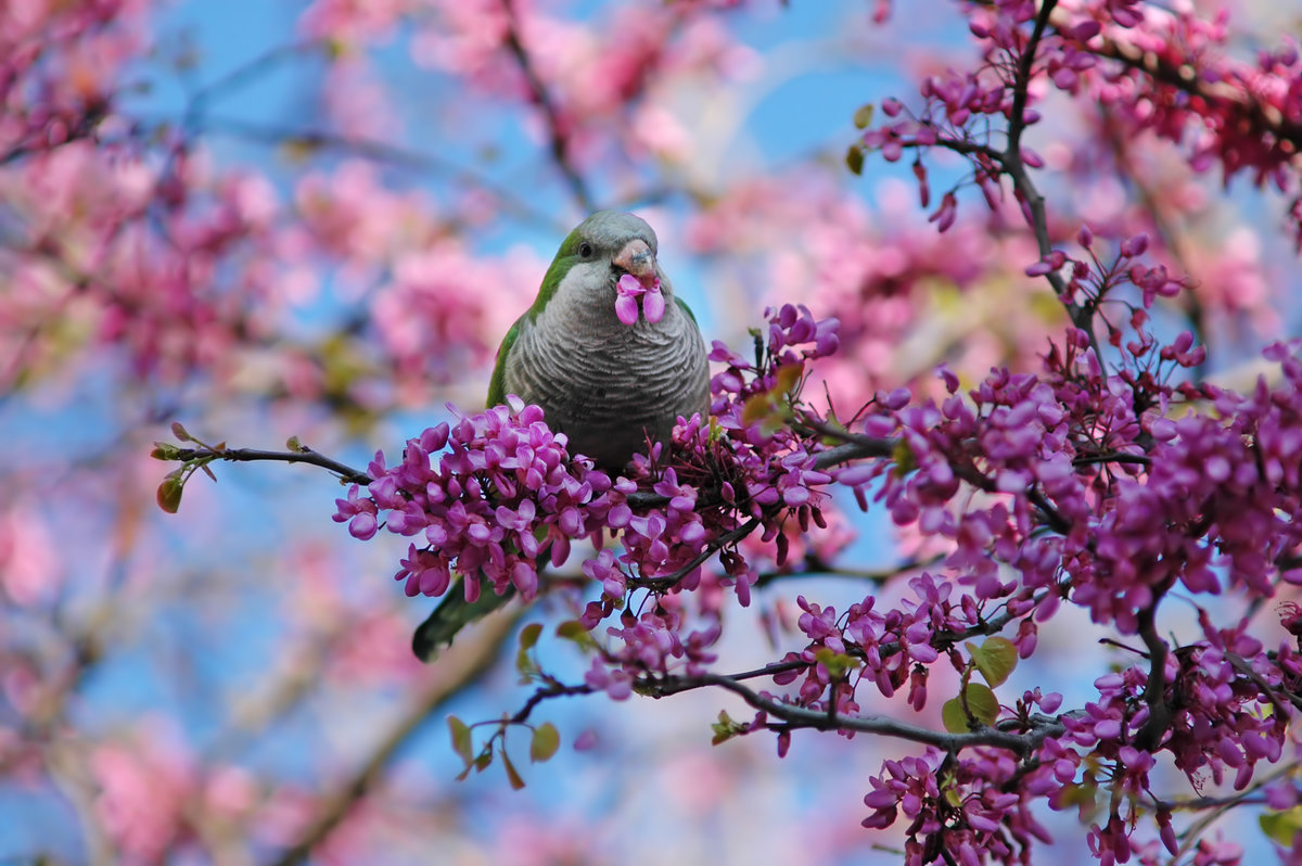 Про цска, картинки с цветами и птицами