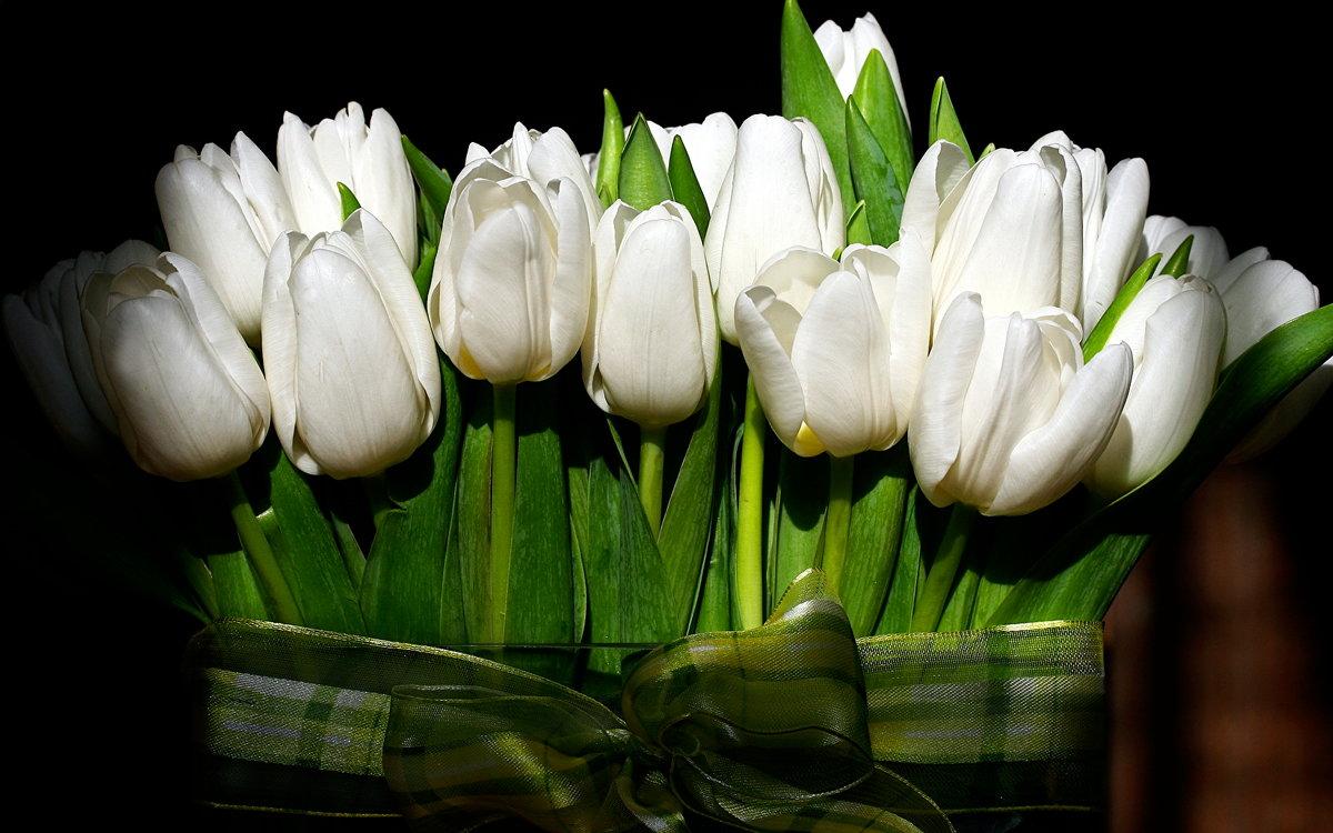 Днем, открытка с днем рождения с белыми тюльпанами
