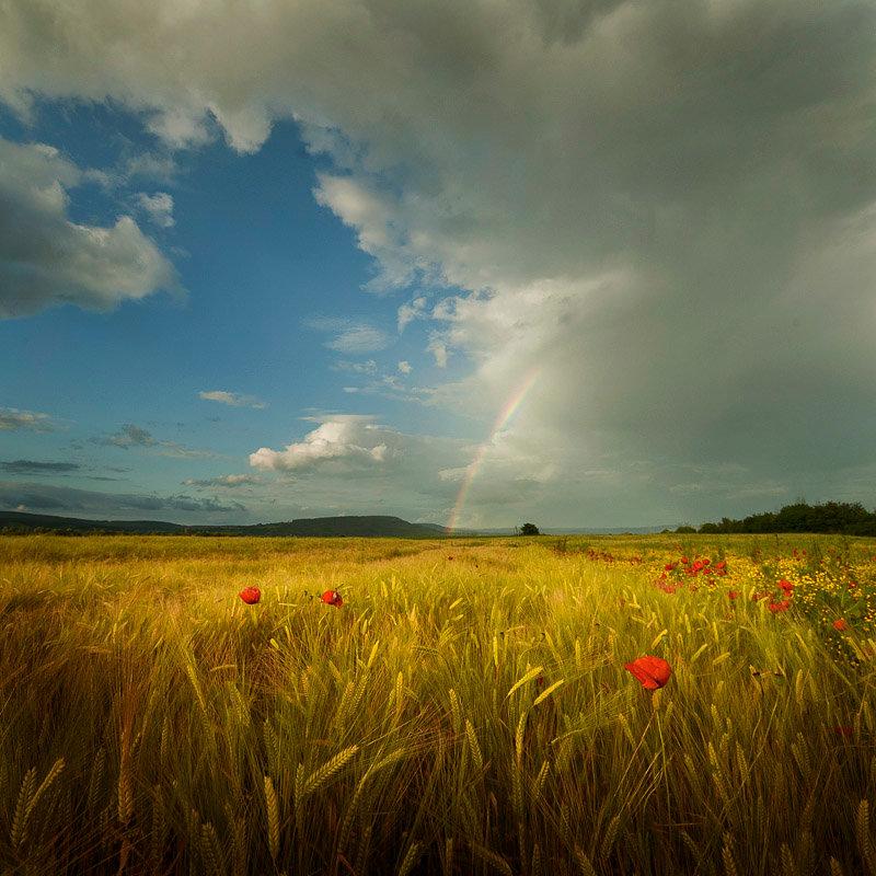 Картинки дождь в поле анимация