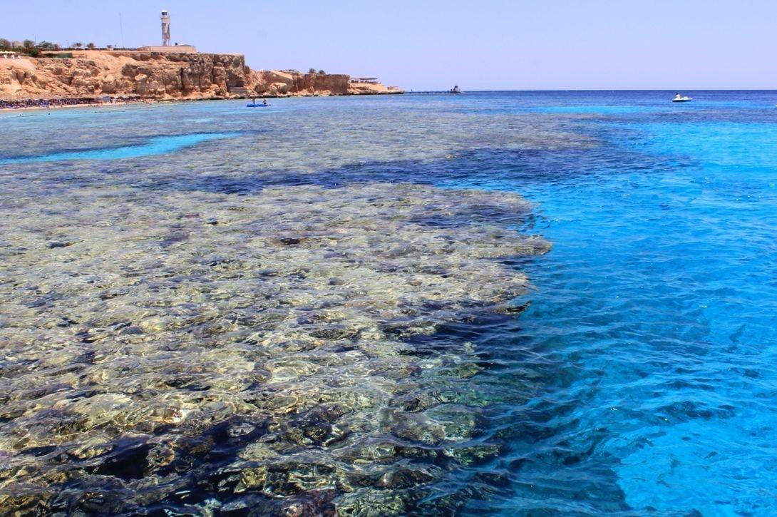 картинки красного моря египет мосс одна