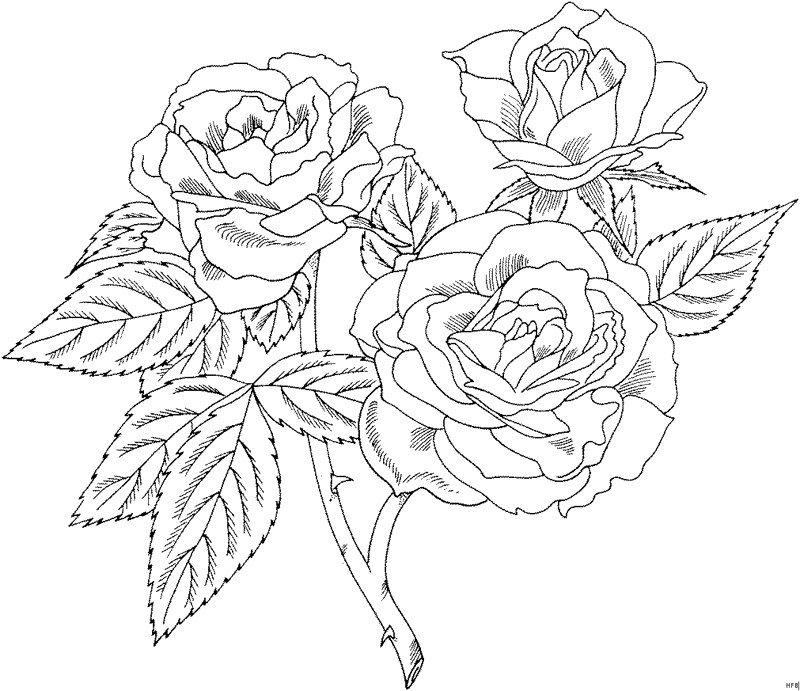 Рисованная картинка, раскраска роза для открыток