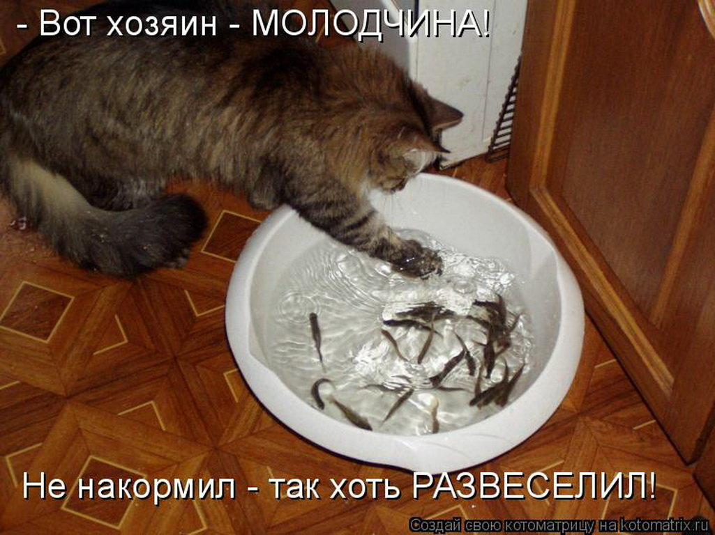 Поздравления любимым, прикольные картинки надписями про кошек