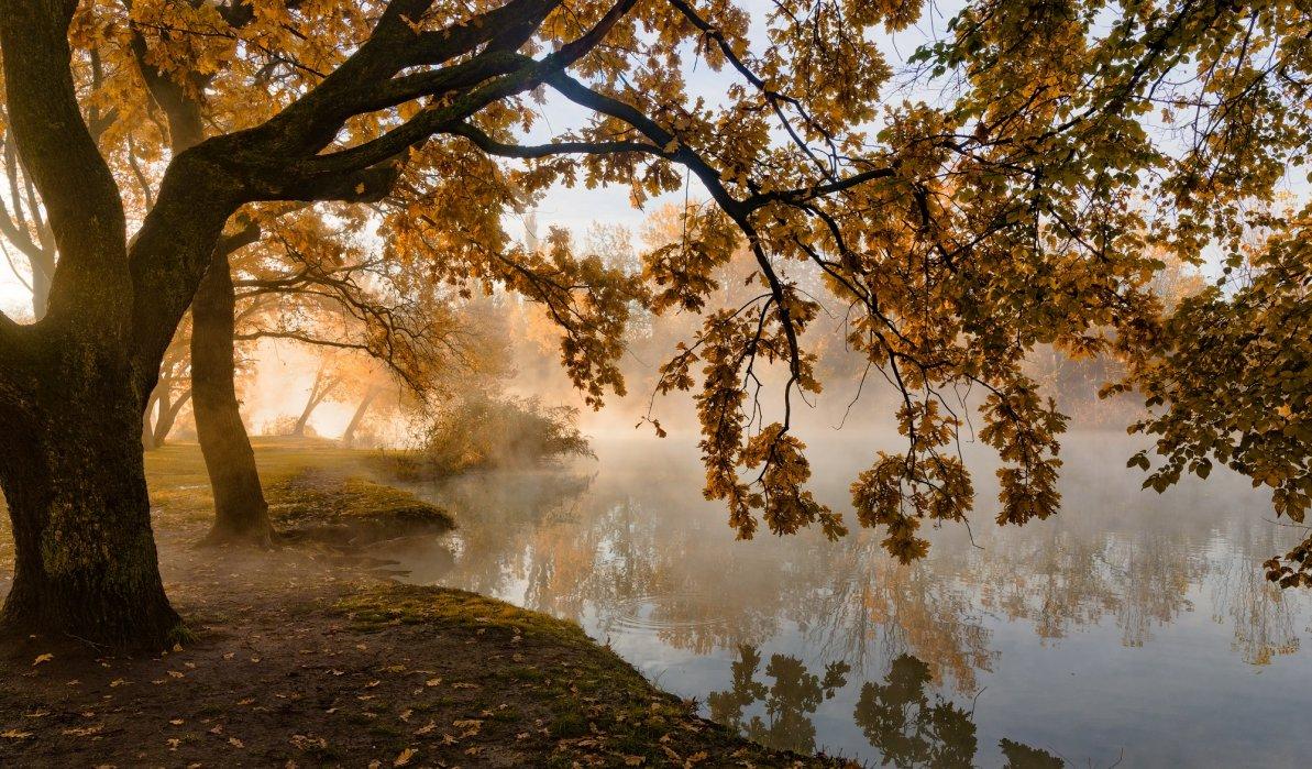 Про осень , свет и туман ..