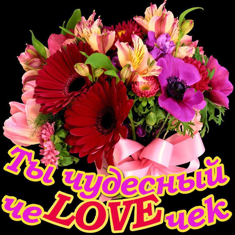 картинки цветы тебе милая выбрать купить нашем