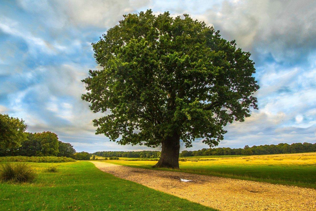 Дерево картинка большое разрешение