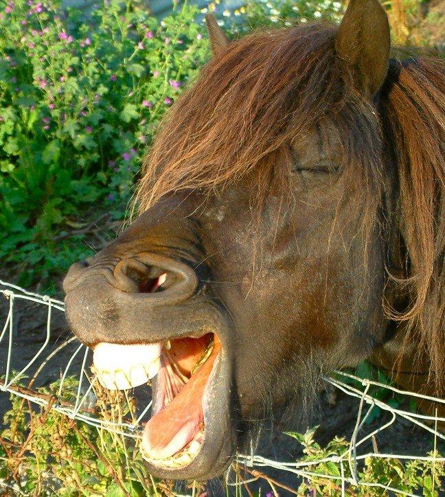 Прикольная картинка лошадь, днем рождения живые
