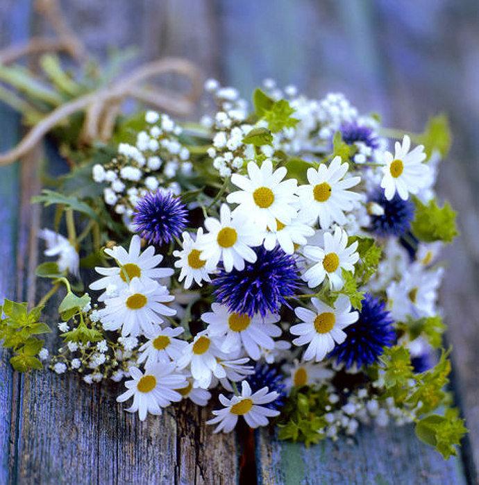 Картинки цветы васильки с ромашками