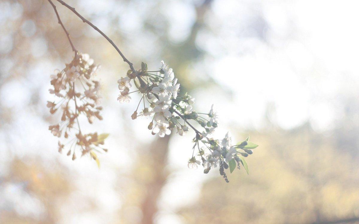 день картинка весна минимализм погибшие украину