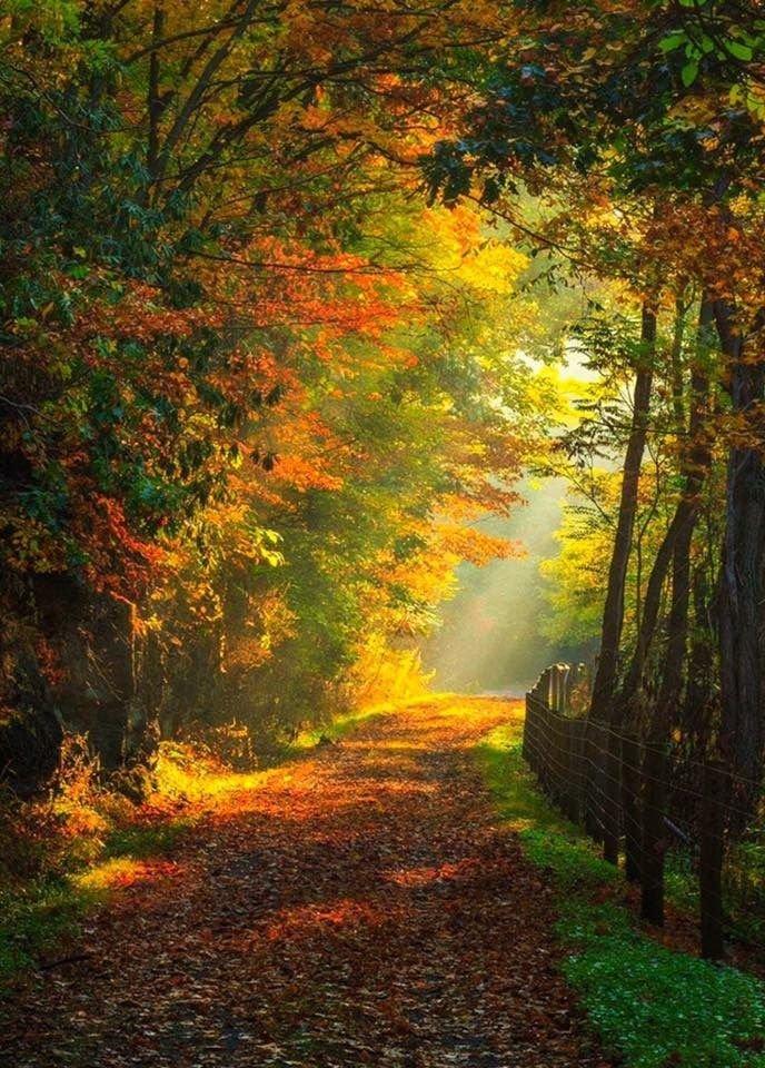 Золотая осень на лесной аллее