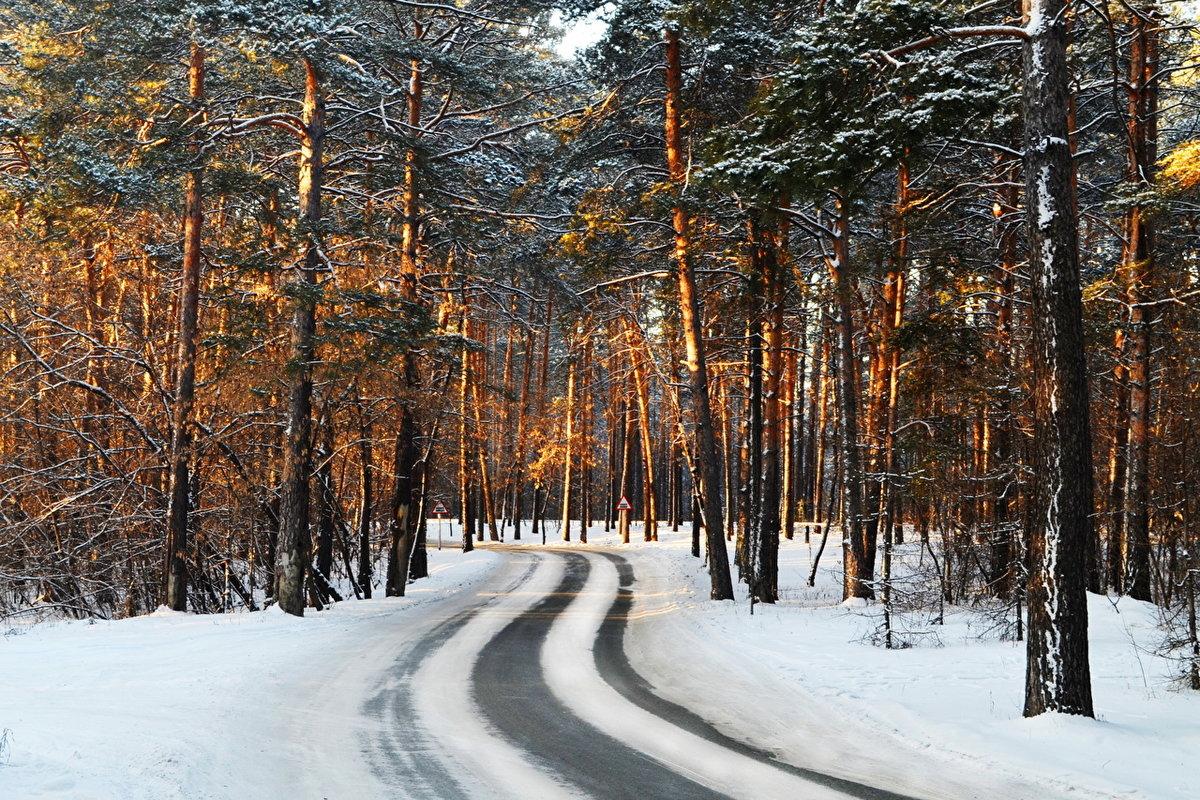 зимние фотографии в сосновом лесу она больше зрачок