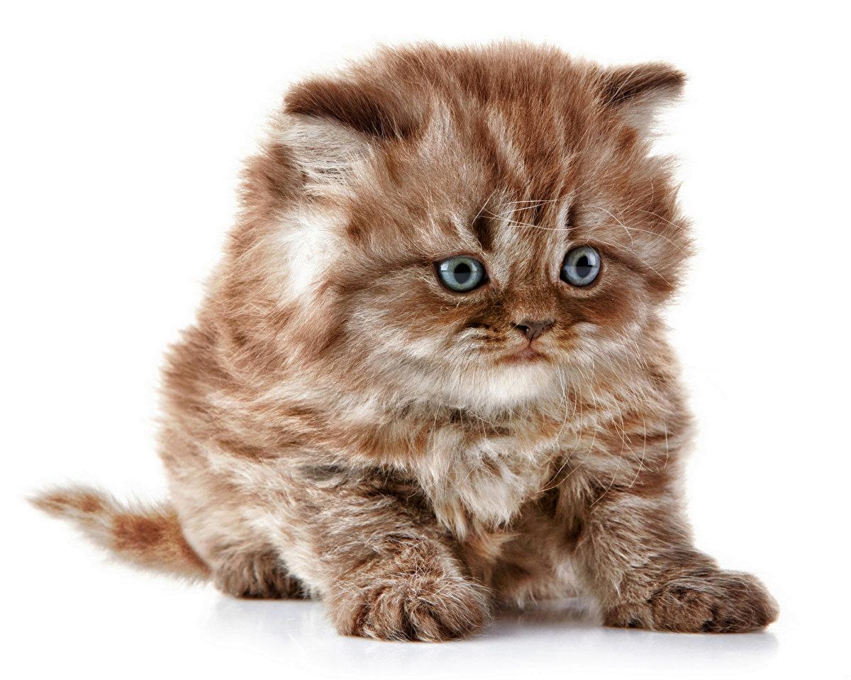 Чудной котенок