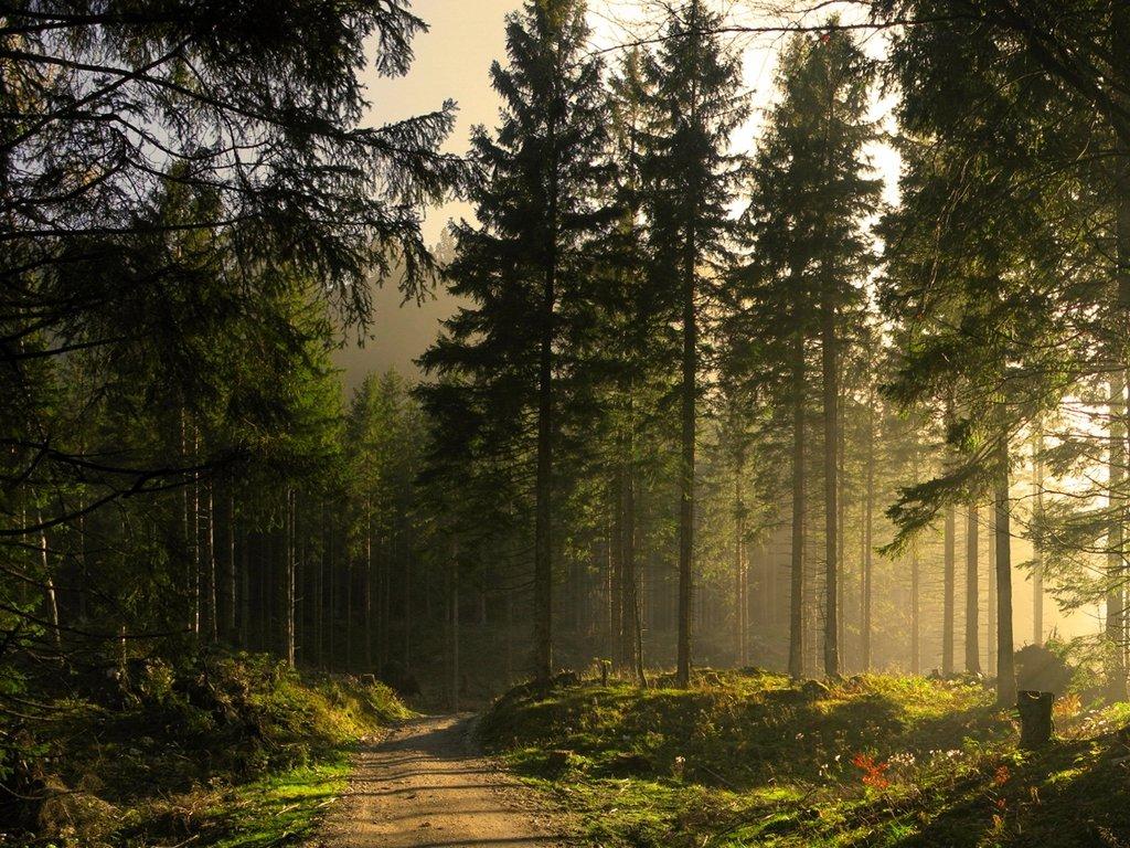 качественные фотографии российского леса мышцы прикреплены