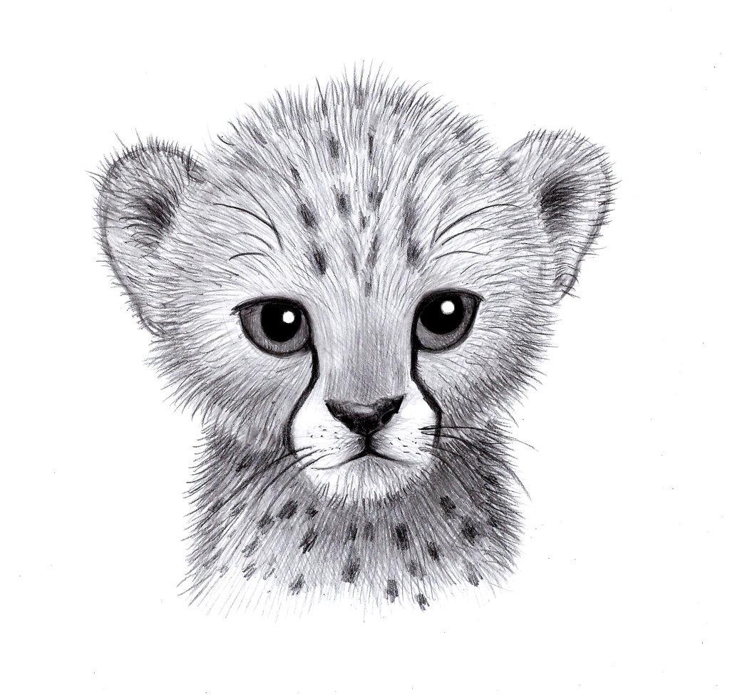 Рисованные картинки животных карандашом