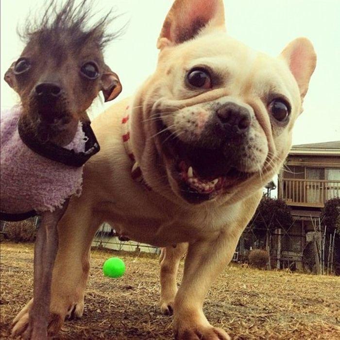 Картинки про собак приколы, спасибище огромное новогодняя
