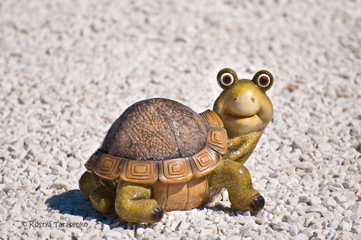 Днем рождения, прикольные рисунки черепахи