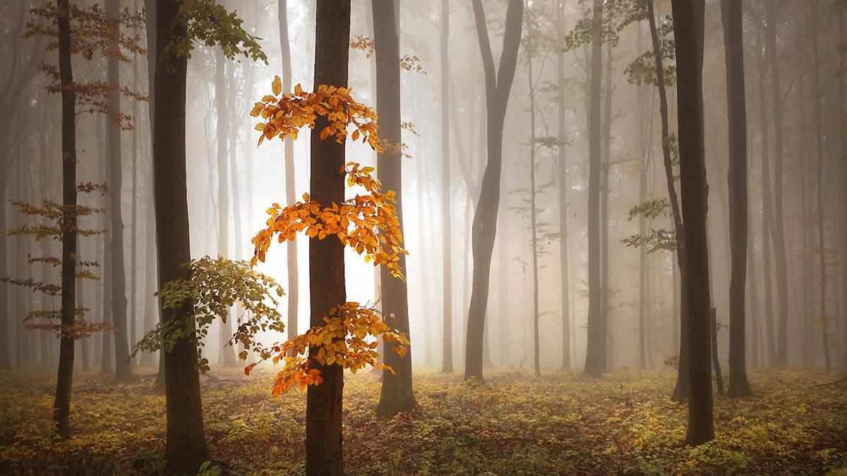 Туман — это облако у поверÑности земли. Нет никакой разницы между туманом и облаком в небе. Когда облако наÑодится у поверÑности земли или моря, мы называем его «туман».