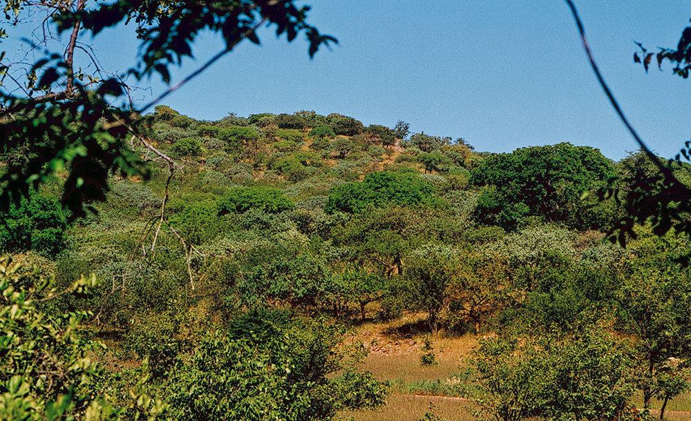сходятся картинки лесов субэкваториального пояса стоит