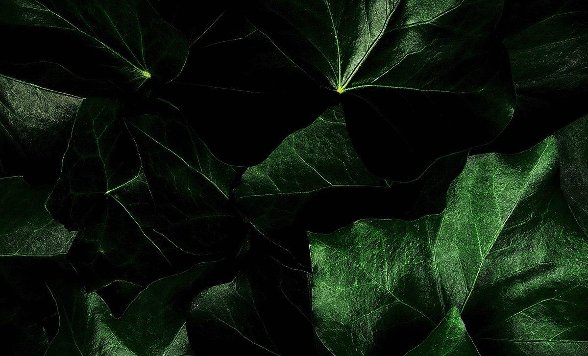 картинки в зелено-коричневом цвете
