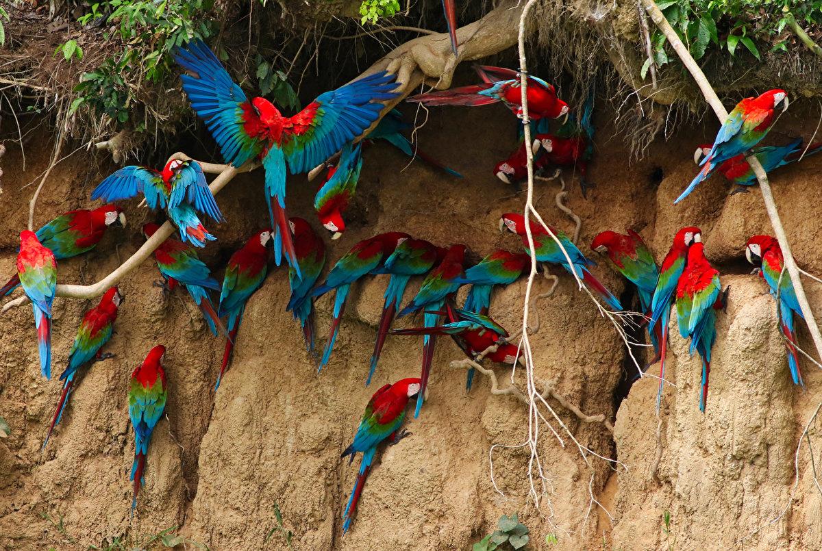 птицы разных стран дарит
