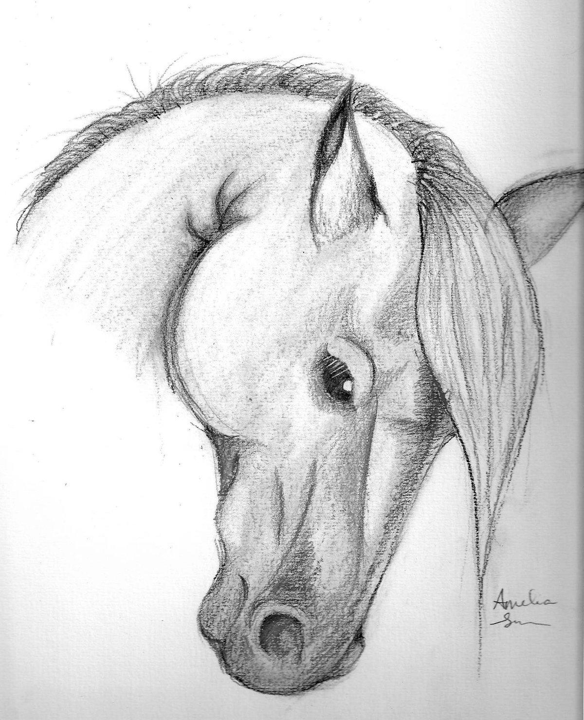 смотреть рисунки карандашом для начинающих животные драповых пальто