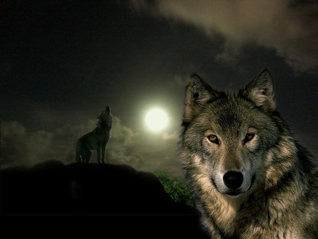 Волки с надписями картинки на андроид, любимому дню