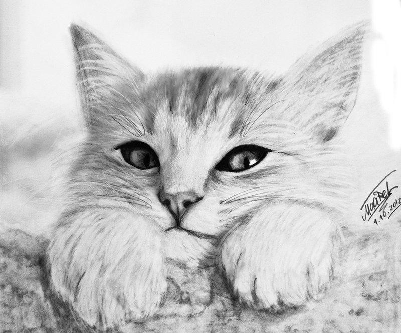 Дедушке, картинки кошек для срисовки