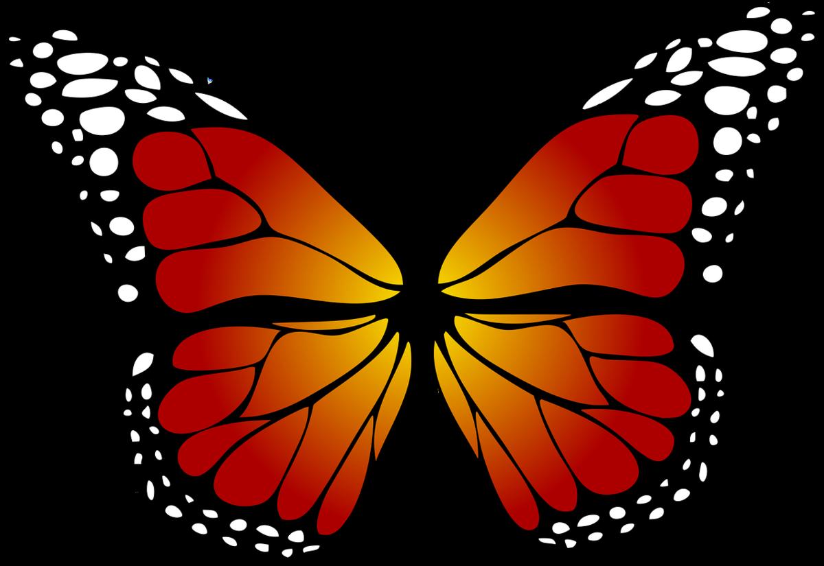 Картинка цветной бабочки