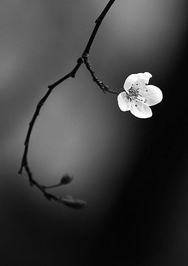 Картинки весны красивые черно-белые