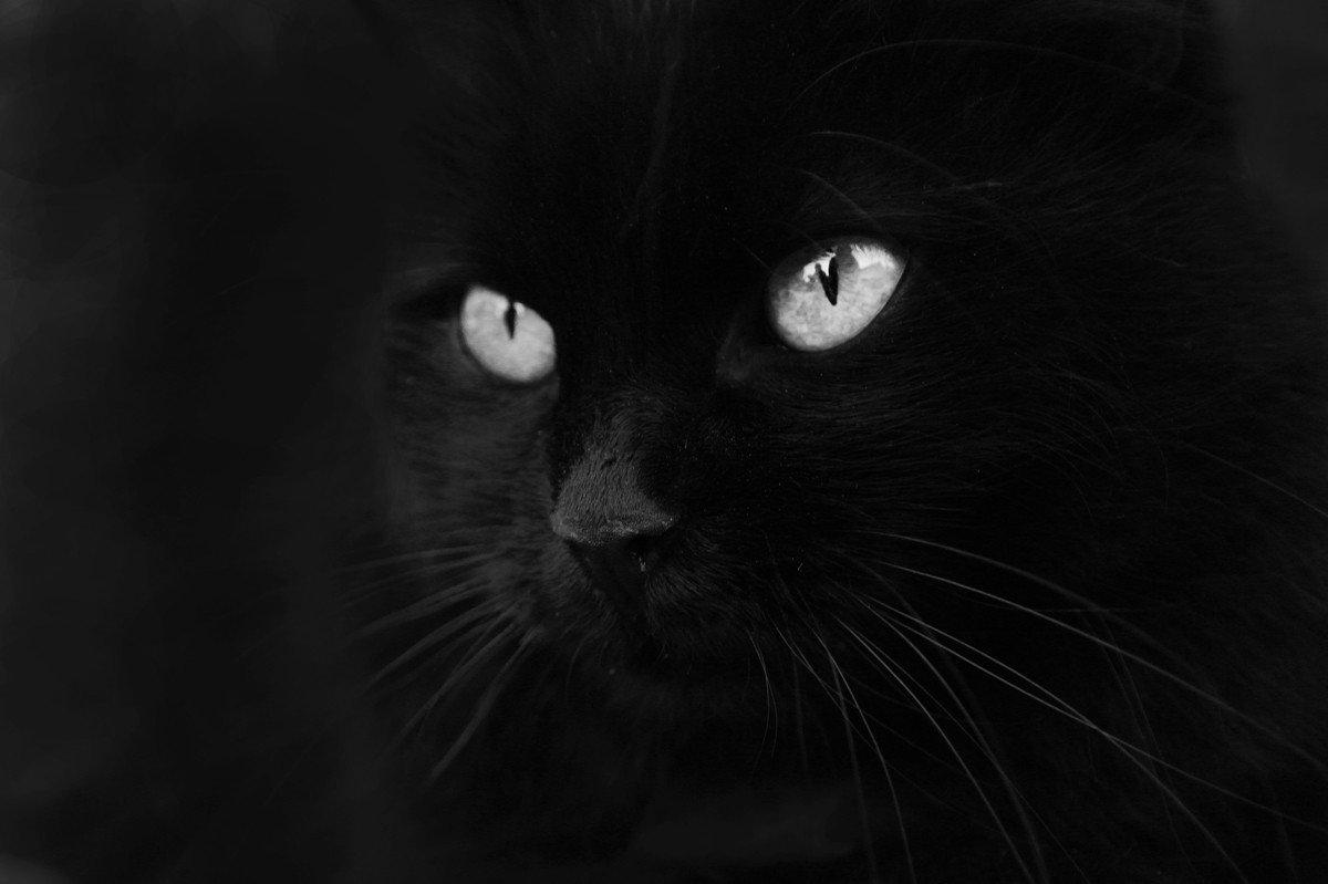 полностью черная картинка для авы умершему хозяину
