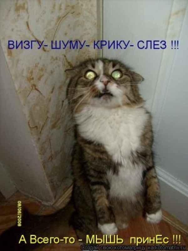 Страсть желание, картинка смешные животные с надписями до слез
