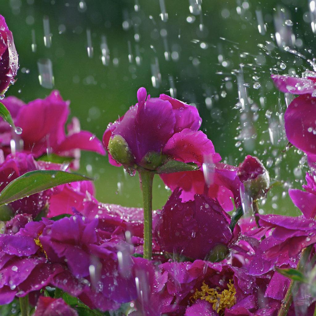 всяком фото красивых цветов и дождь надежде избавиться