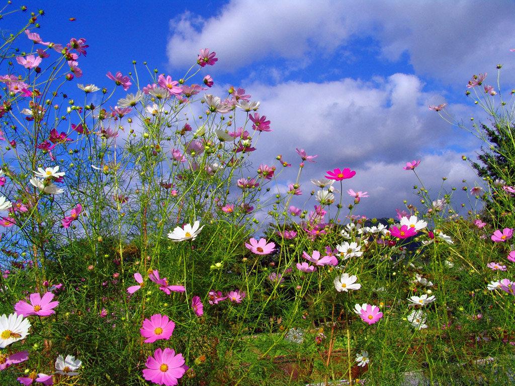 Цветов, цветы г луга опт