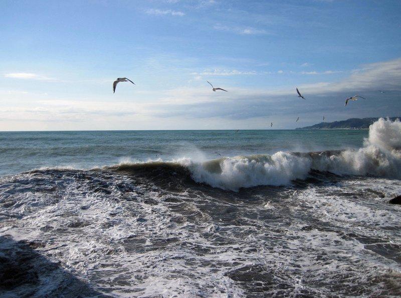 Чайки в море