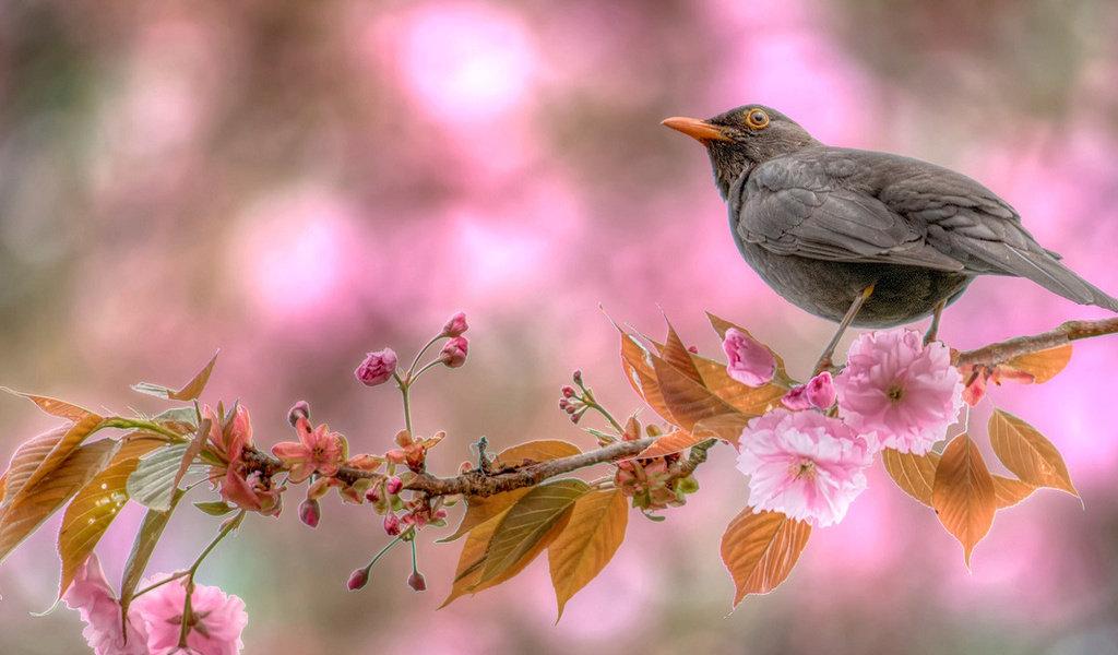Звездопад, открытка ранняя птичка
