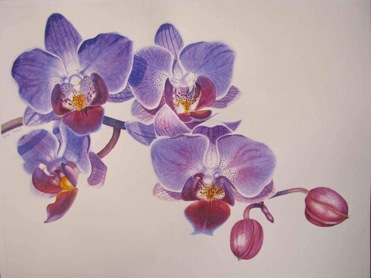 Орхидеи картинки рисунки