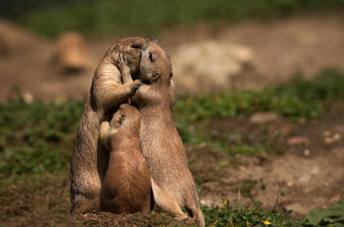 Картинки любовь животных, поздравление летом