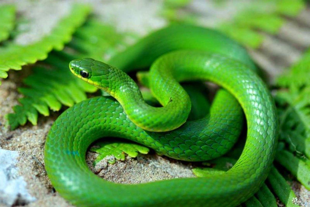 snake - HD1200×801