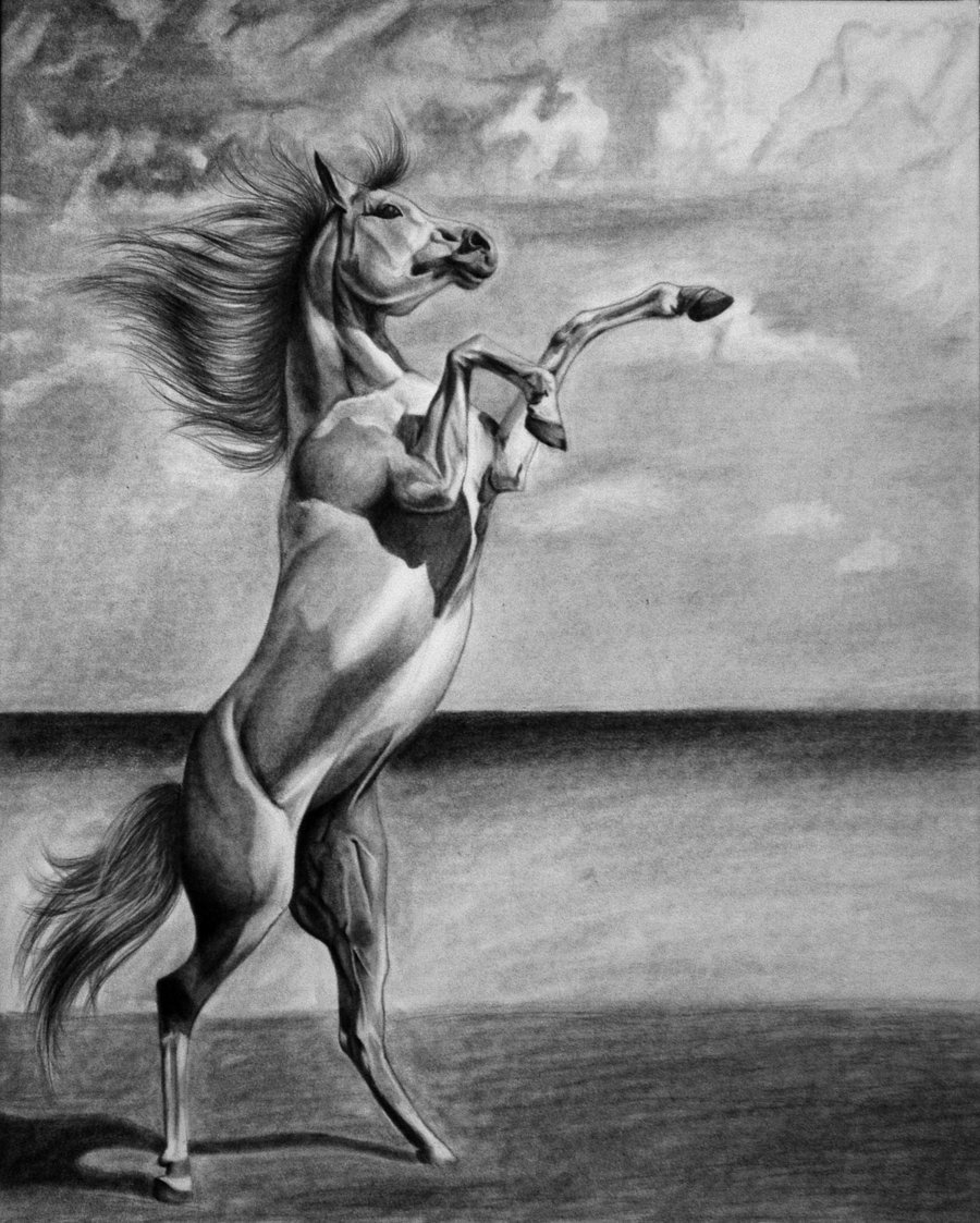 этой фото коня графика никому голову придёт