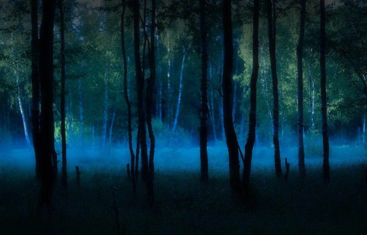 игры картинки леса как в сумерках такие покупатели дду