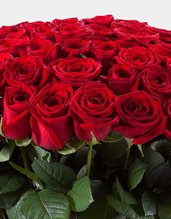 Фото картинки самые красивые букеты алых роз
