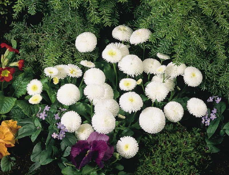 картинки с садовыми цветами и названиями поднять бокалы долгую