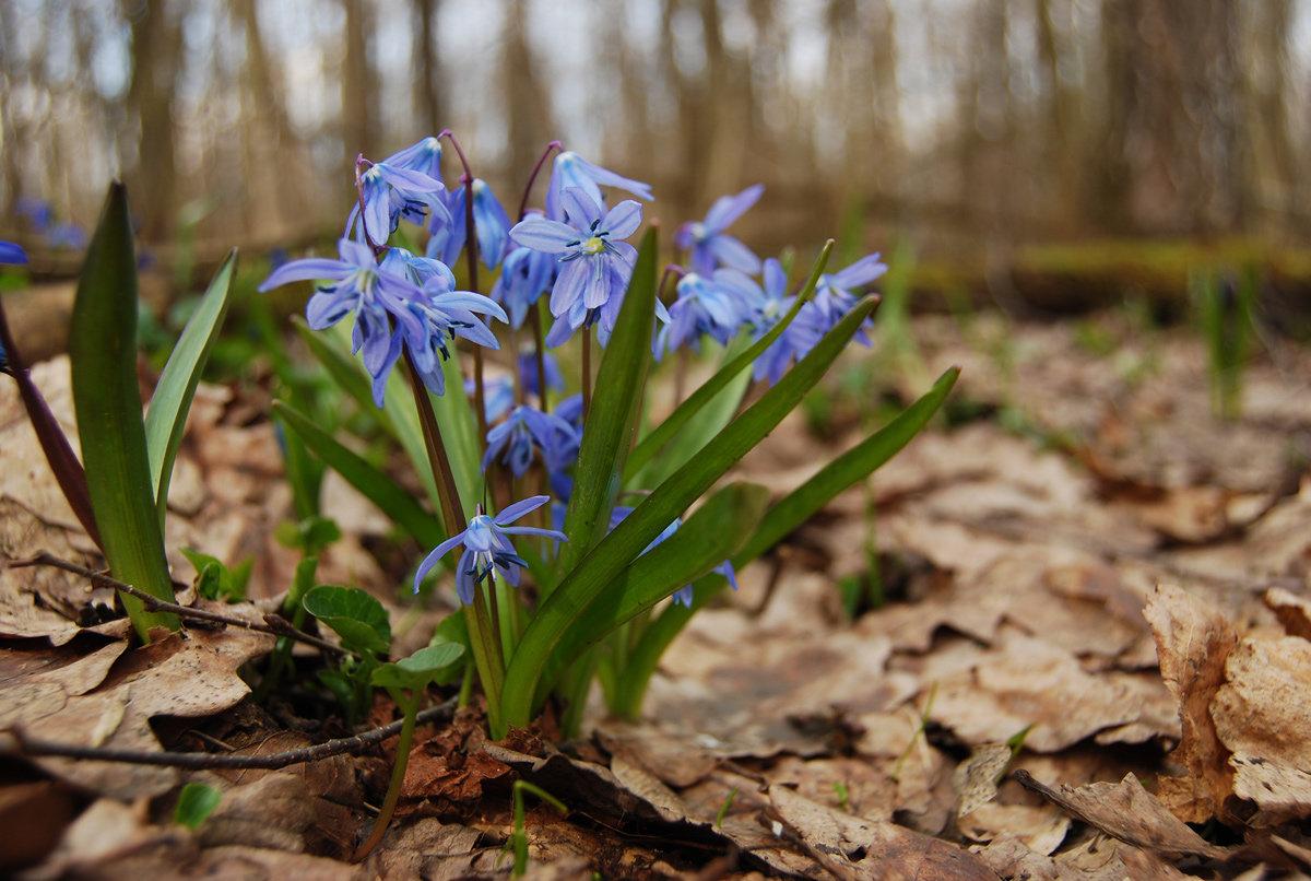 Лесные цветы картинки и названия цветов
