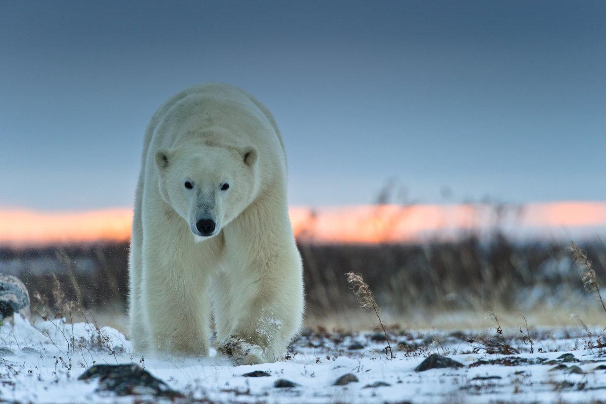 Сюжетные картинки к сказке три медведя честно, комментарии