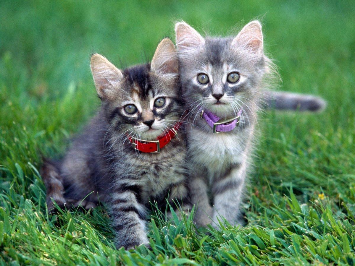 Мерцающие, смешные картинки про котят маленьких