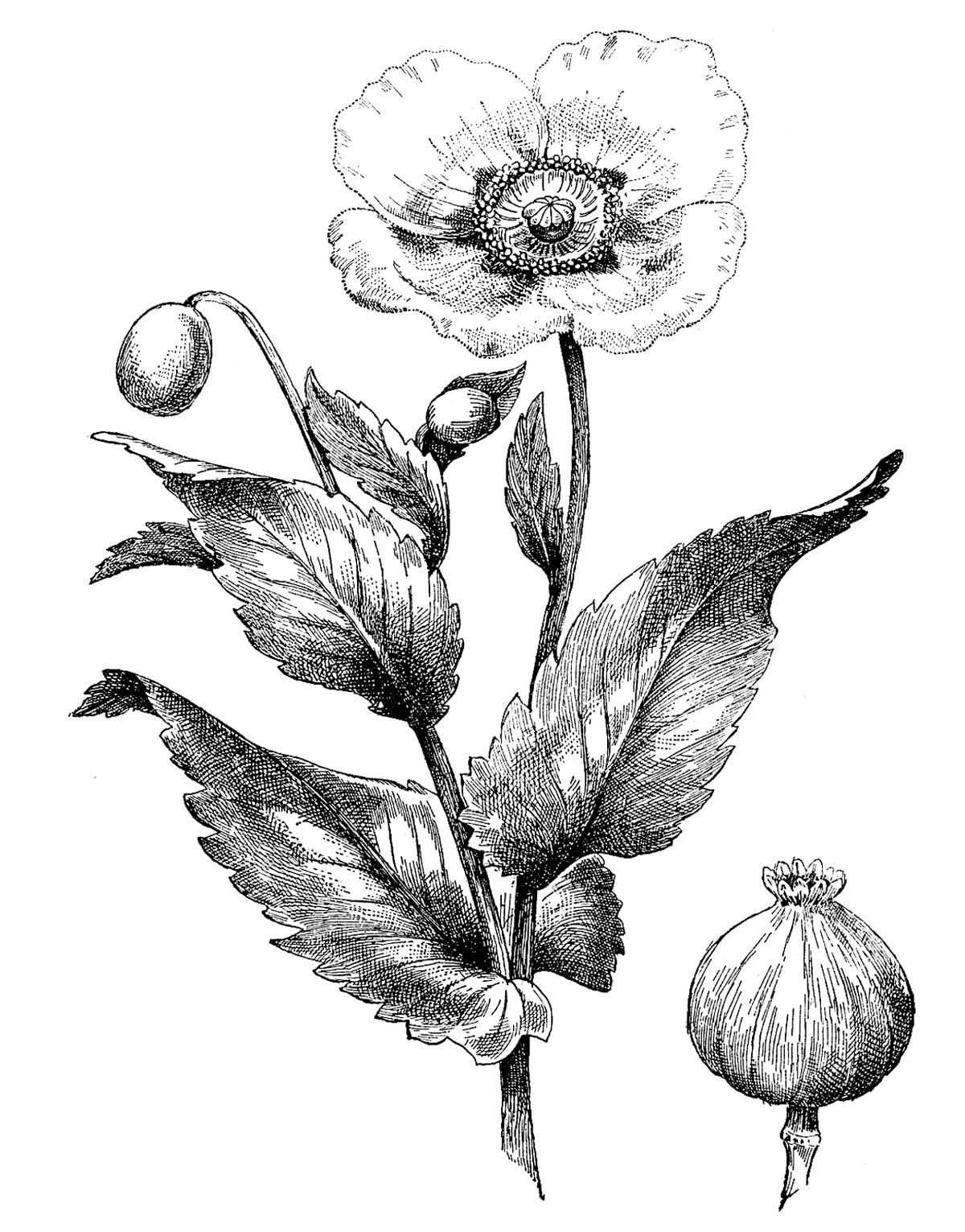 Картинки цветы графика
